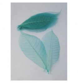 15 Feuilles fossiles turquoise