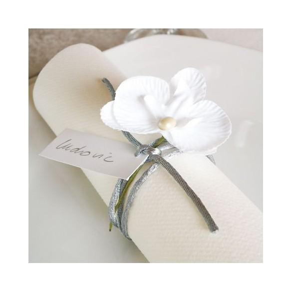 6 Orchidées blanche