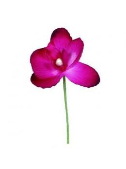 6 Orchidées fuchsia