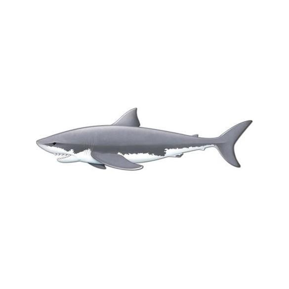 Déco carton requin