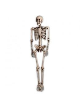 Squelette réaliste 160cm