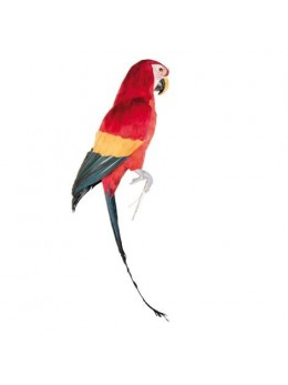 Perroquet multicolore 70 cm