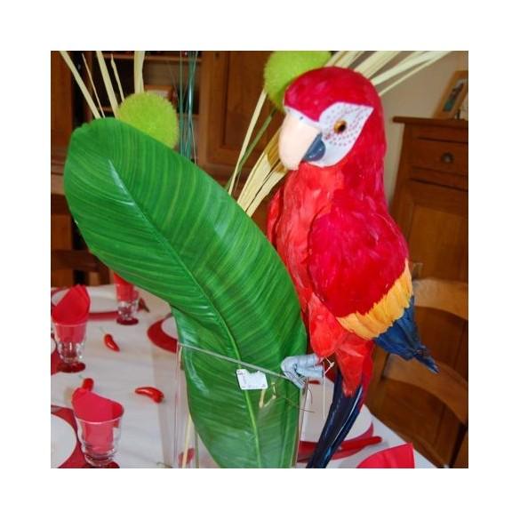 Perroquet multicolore 63 cm