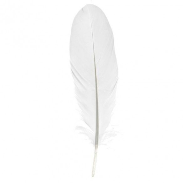 6 PLUMES BLANCHES MM