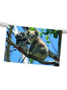 guirlande australie koala