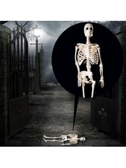 squelette latex 20cm