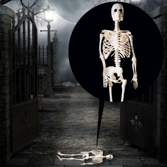 Figurine squelette 20cm