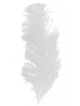 plume autruche blanche