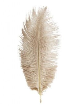 5 Plumes autruches taupe 20-25cm