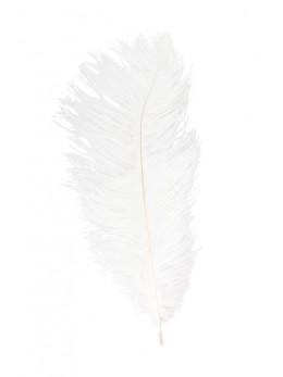plume d'autruche blanche 60cm