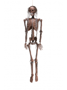 Déco squelette momie