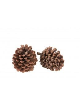 2 pommes de pin naturelles 8x13cm