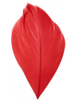 Plumes rouge