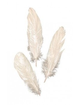 Set 8 plumes blanc 20cm