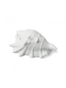 Coquillage blanc