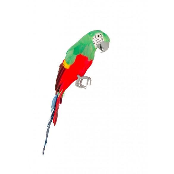 Perroquet Rouge Et Vert 39 Cm