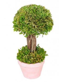 Arbustre vert dans pot 21.5cm