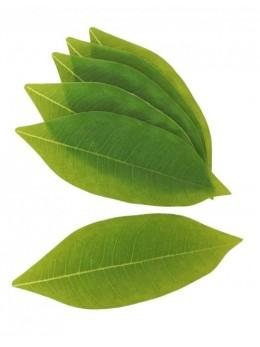 12 feuilles vertes pachira 17cm