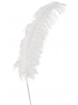 Plume d'autruche blanche 50 cm